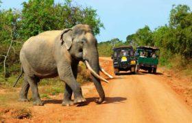 dzhip-safari-natsionalnyj-park-yala