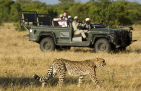 big-cat-safari-1