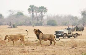 sunsafaris-8-lower-zambezi-national-park-safari